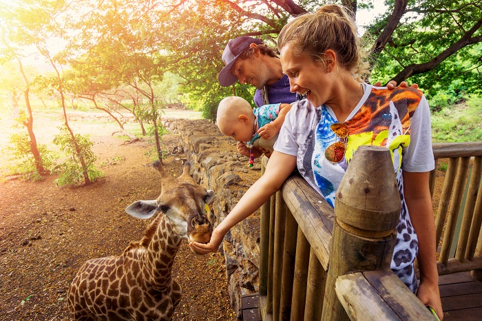 Family feeding a giraffe