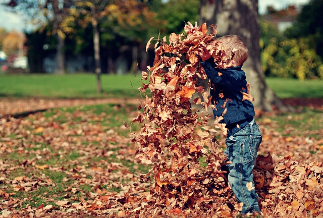 Image of child playing with leaves in the fall season.